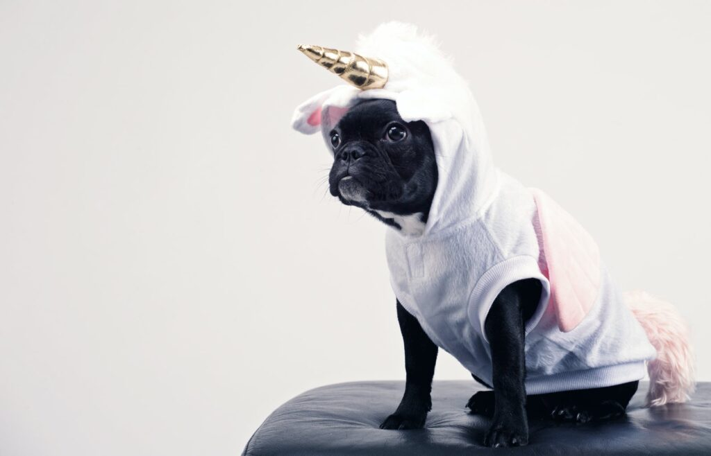 doggo in costume